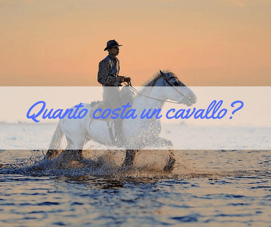 quanto costa un cavallo?