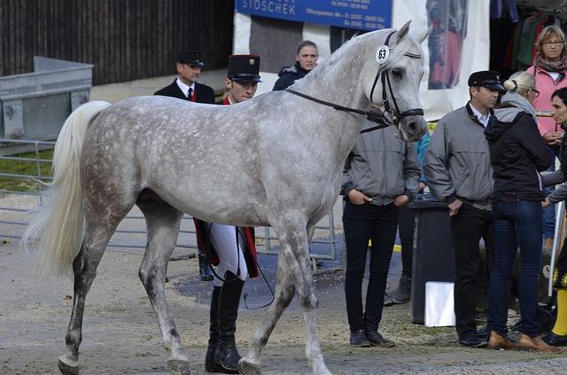 Investire sui cavalli da corsa conviene