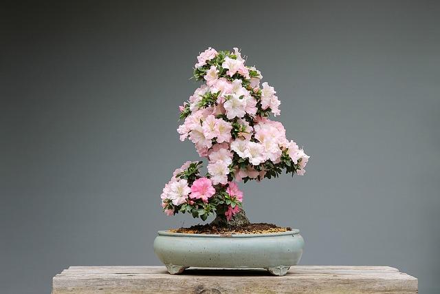 quanto costa un bonsai